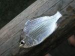 stefish3