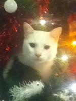 Capà Mèo