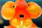 ctf_firefish
