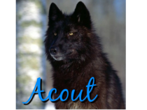 Acout