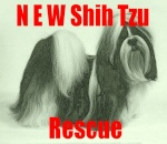 NEW Shih Tzu Rescue