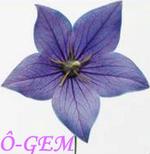 Ô-GEM