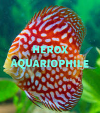 HeroxAquariophile