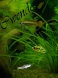 Cwendo