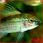 K-ko76