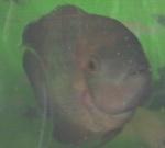 Shaysfishys