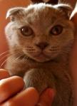 gatto18