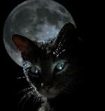blackcat55