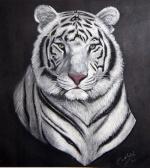 tiger_war87