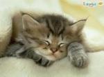 Little_Kitty