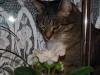 Вот такой у меня ценитель живет ,очень любит цветочки, а некоторые даже на вкус! Туська,Астана