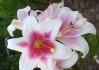 6.Любимое растение (не фиалка) Ssl21010