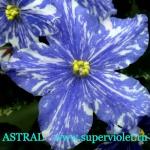Superviolet