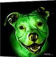 Greendogz