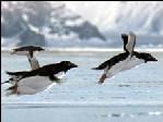 flyingpenguin