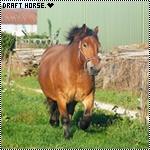 Draft Horse.♥