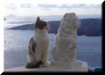 gatto di marmo