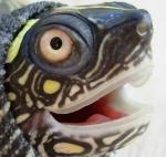 hh.turtles