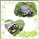 turtle59