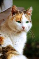 Tag und Nachtkatzen 19-91