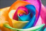 مملكة الألوان
