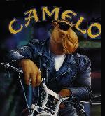 Marcos Camelo