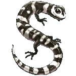 salamander007