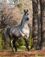 horsy01