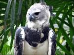 Les oiseaux domestiques, de volières. 251-72