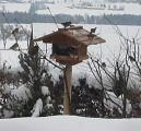 Les observations d'oiseaux sans photos 252-96