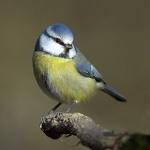 Sauvetages d'oiseaux. 70-17