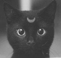 SailorV