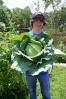 OS cabbage picked 7-7-12 weighed 8.8 lbs with outer leaves