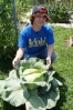 OS cabbage growing in a large flower pot in Mel's Mix.  Picked 7-7-12 weighed 8.8 lbs with outer leaves, and 5.8 trimmed