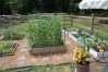 Peas at the top of the conduit. 3 different height squares.