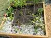 Showcase of Gardens Dscn1511