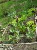 Showcase of Gardens Veges_11