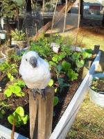 Gardenerd