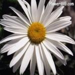flowering_fauna