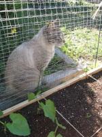 sarah in the garden