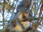 Gabe the squirrel
