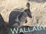 Walkobassars