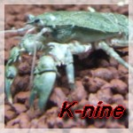 K-nine