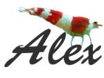 alex du 42