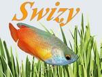 swizy59690