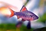 Fish5398