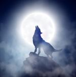 Wolf Hawke