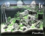 Planthus