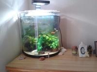 poisson d'eau douce 25
