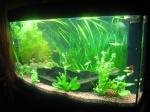 poissons59